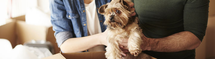 dog relocation dubai
