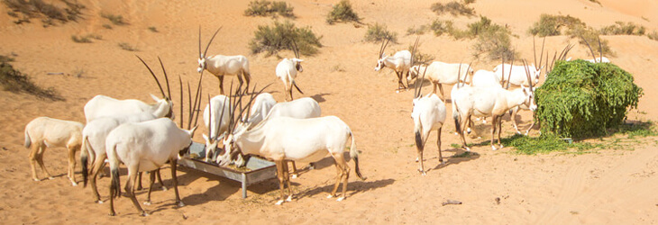 Al Marmoom Desert animals