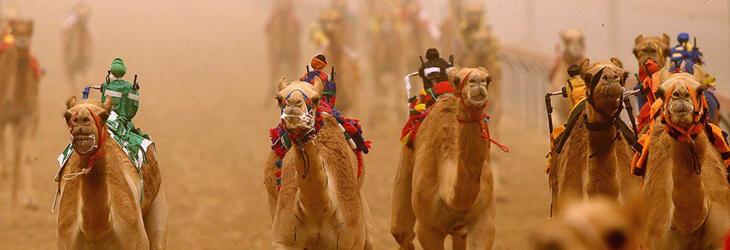 Al Marmoom Desert camel race